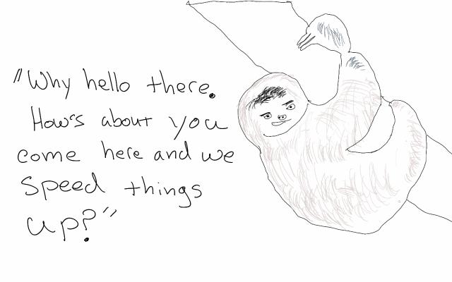 sloth bachelor